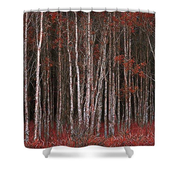Deep Forest 2 Shower Curtain