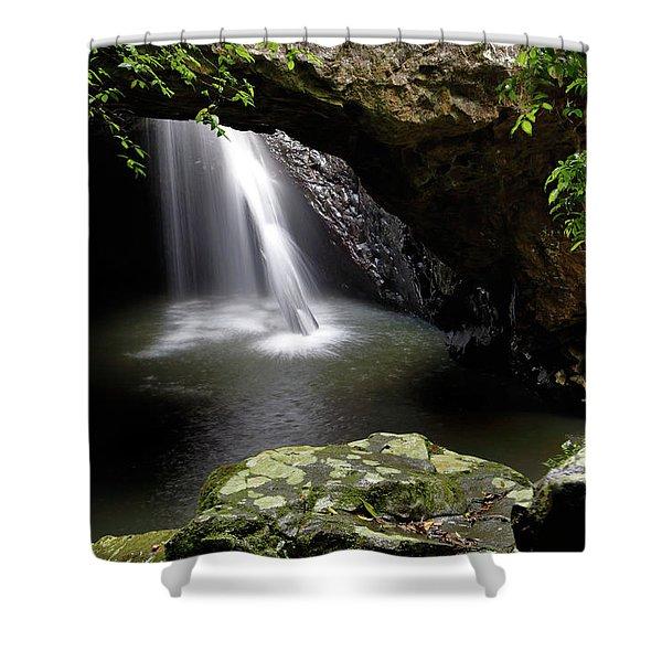 Deep Forest Shower Curtain