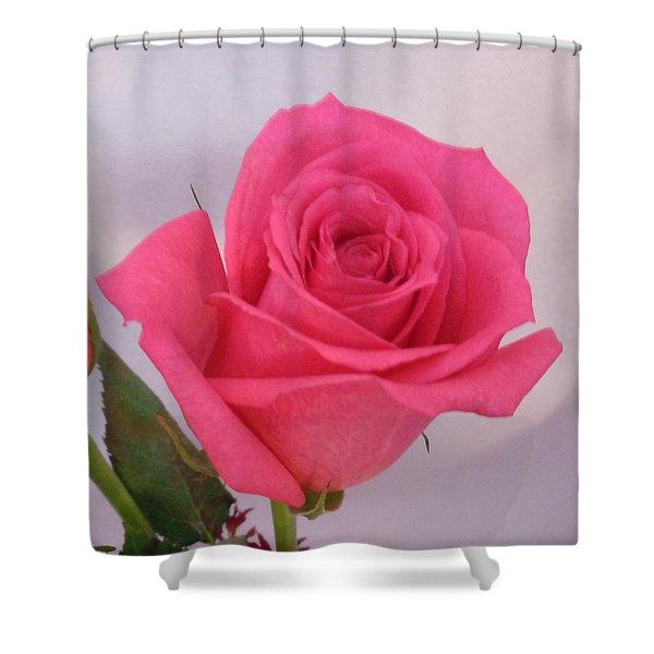 Single Deep Pink Rose Shower Curtain