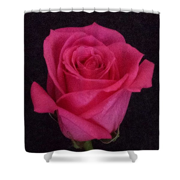 Deep Pink Rose On Black Shower Curtain