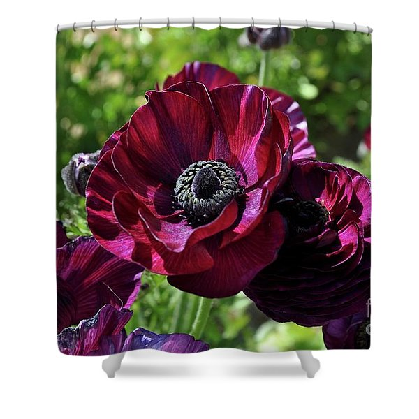 Deep Ranunculus Shower Curtain