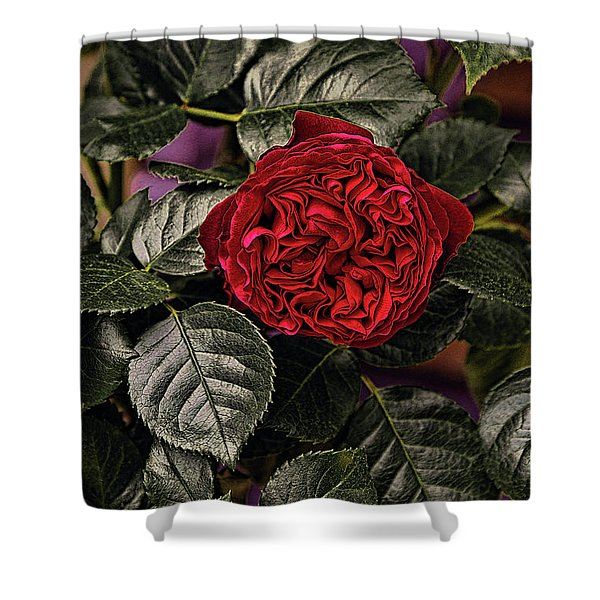 Deep Red Rose Shower Curtain