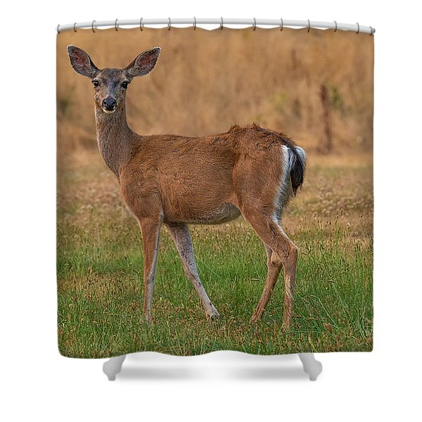 Deer At Sunset Shower Curtain