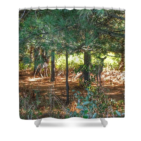 1011 - Deer Of Croswell I Shower Curtain