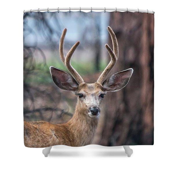 Deer Stare Shower Curtain