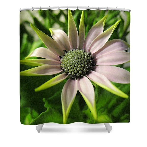 Delicate Dreamer Shower Curtain