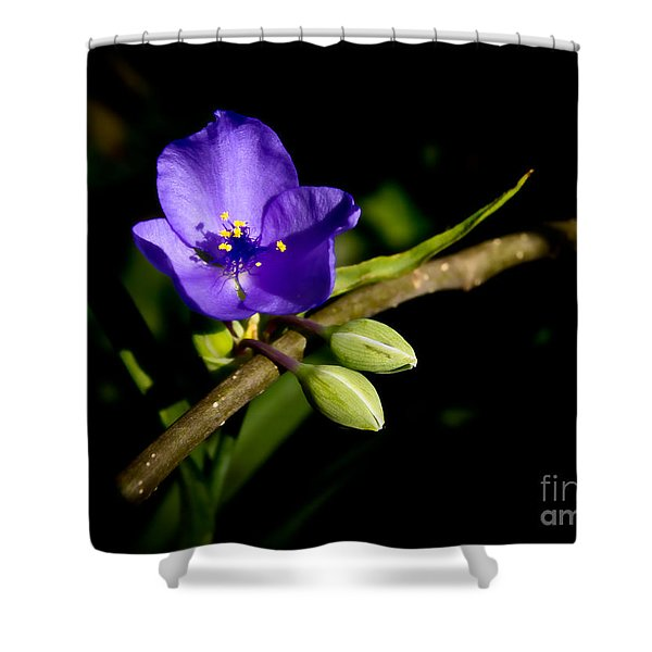 Delicate Purple Flower Shower Curtain