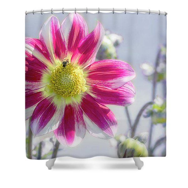 Delicious Dahlia Shower Curtain