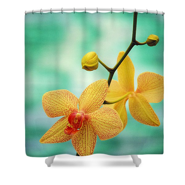 Dendrobium Shower Curtain