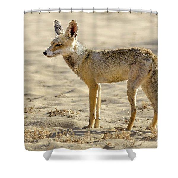 desert Fox 02 Shower Curtain