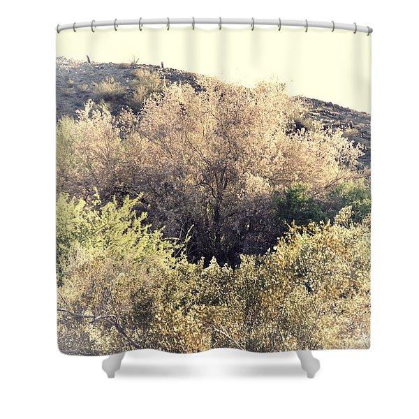 Desert Ironwood Afternoon Shower Curtain