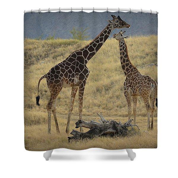 Desert Palm Giraffe Shower Curtain