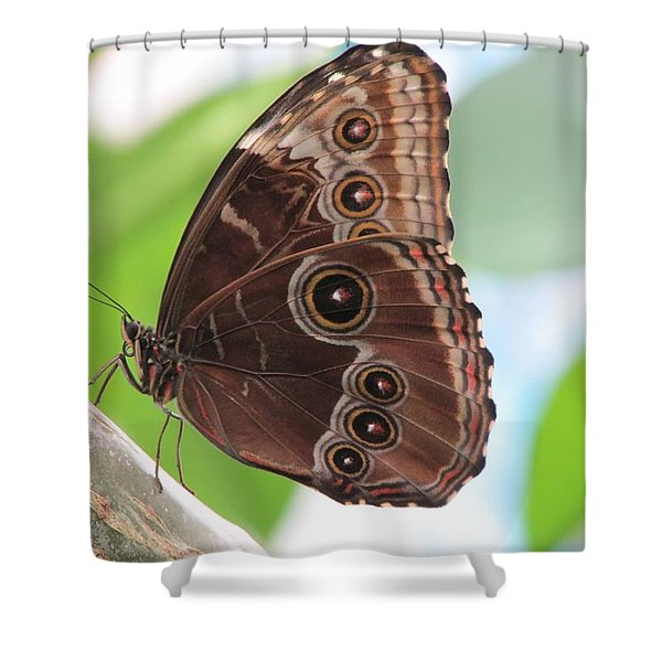 Detailed Wings Shower Curtain