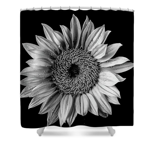 Dew Covered Sunflower In Black And White Shower Curtain