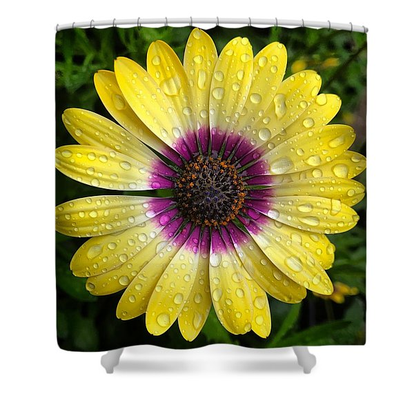 Dew Dropped Daisy Shower Curtain