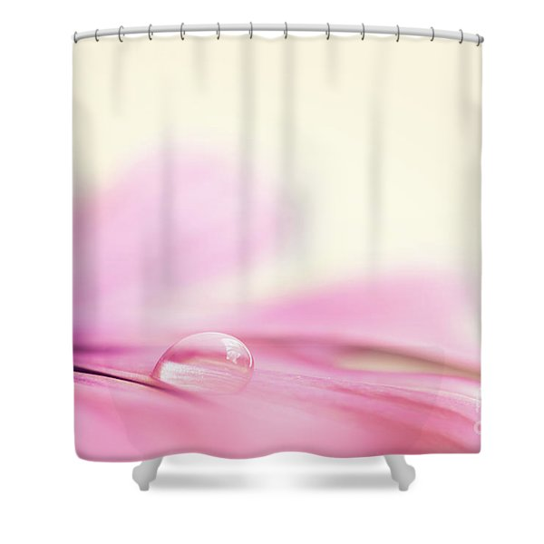 Dew On A Daisy Shower Curtain