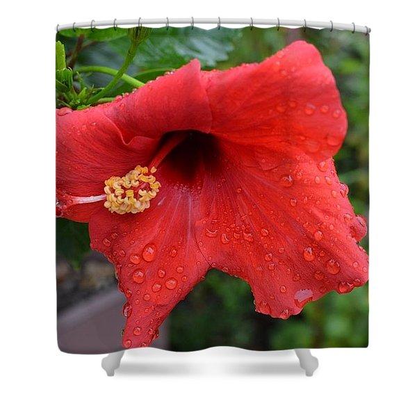 Dew On Flower Shower Curtain