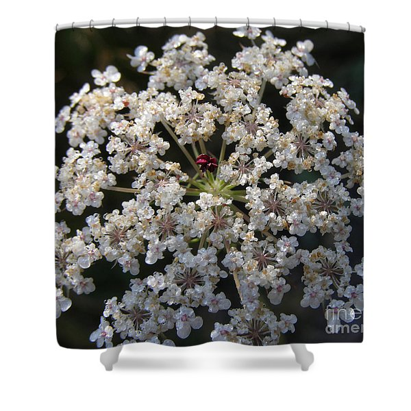 Dew On Queen Annes Lace Shower Curtain