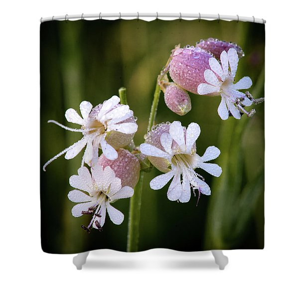 Dewy Morning Shower Curtain