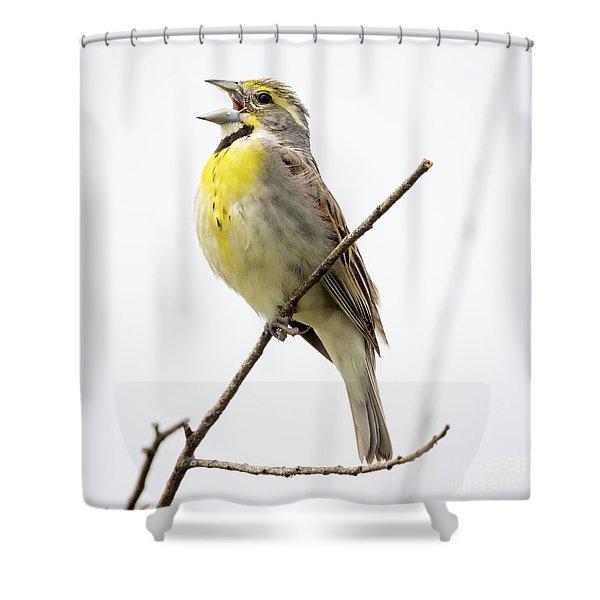Dickcissel  Shower Curtain