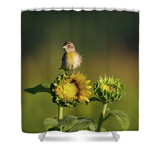 Shower Curtain featuring the photograph Dickcissel Sunflower by Andrea Silies