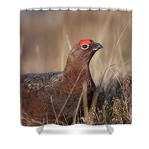 Did I Overdo It With The Eye Shadow? Shower Curtain