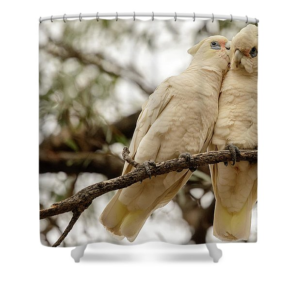 Did You Hear The One About ... Shower Curtain