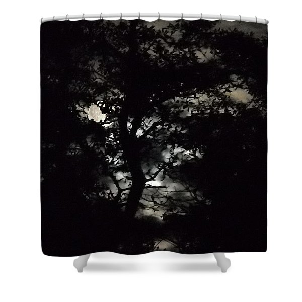 Shower Curtain featuring the painting Digital Fine Art Work Full Moon Trees Gulf Coast Florida by G Linsenmayer
