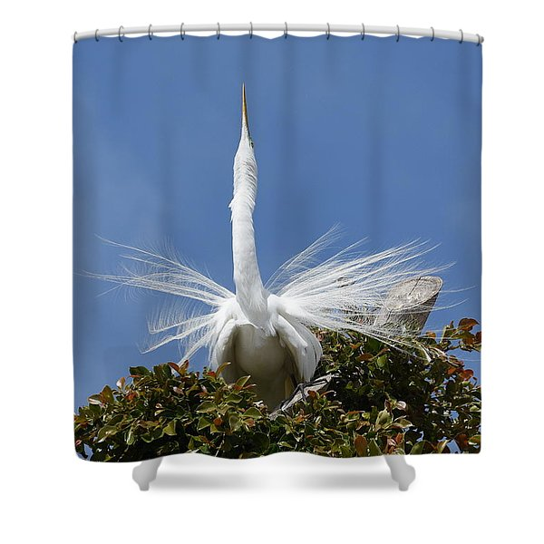 Displaying 2 Shower Curtain