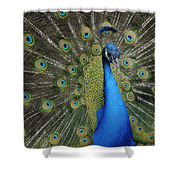 Displaying Peacock Portrait Shower Curtain