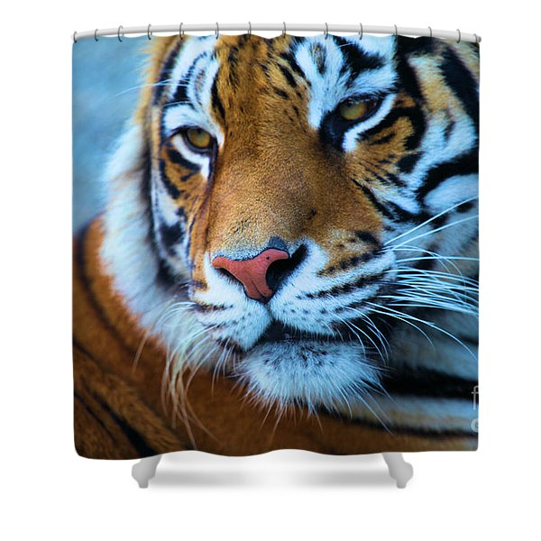 Distracted Shower Curtain