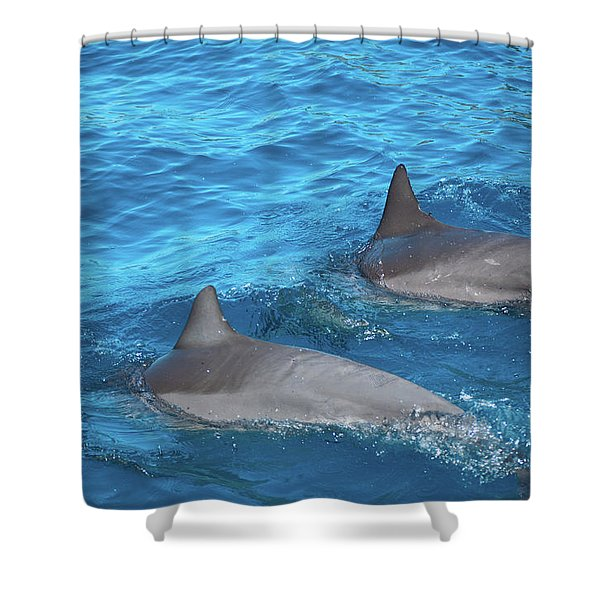 Dive On In Shower Curtain