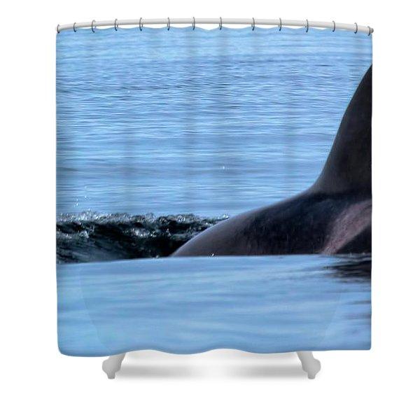 Dive Shower Curtain