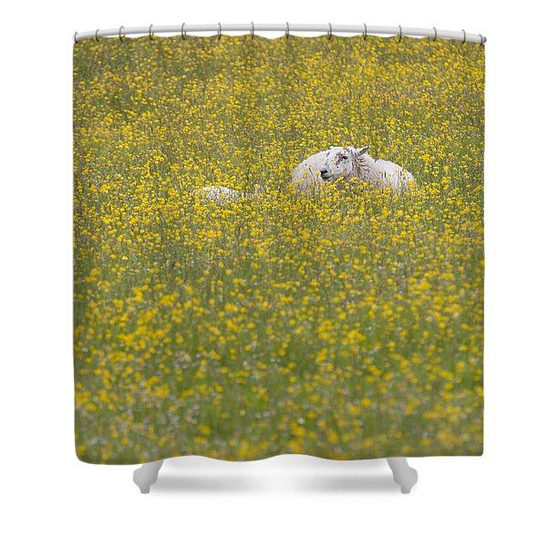 Do Ewe Like Buttercups? Shower Curtain
