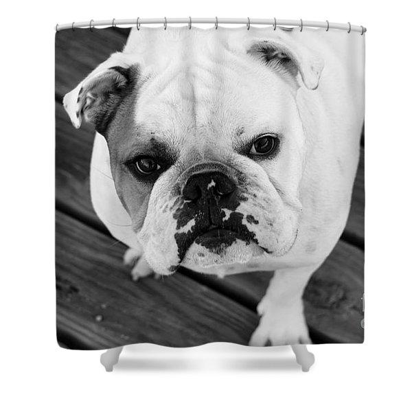 Dog - Monochrome 6 Shower Curtain