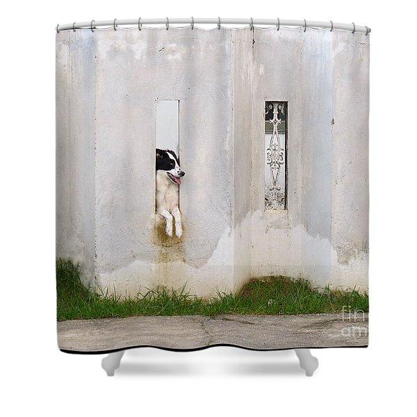 Dog Watching Shower Curtain