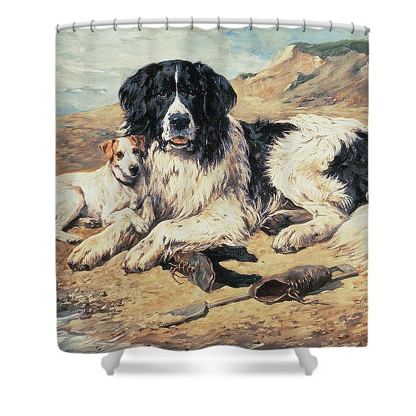 Dogs Watching Bathers Shower Curtain