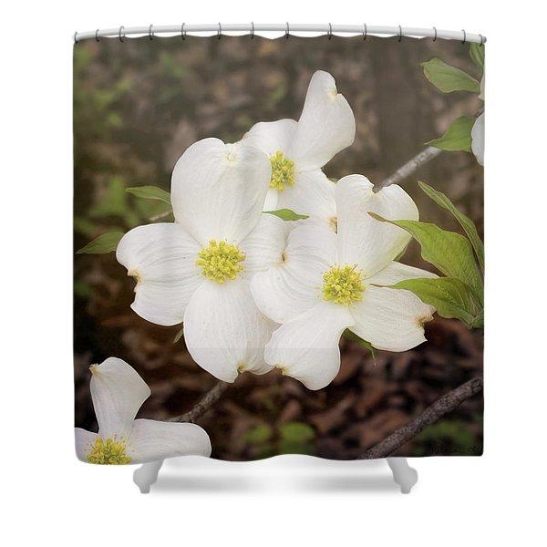 Dogwood Blossom Trio Shower Curtain