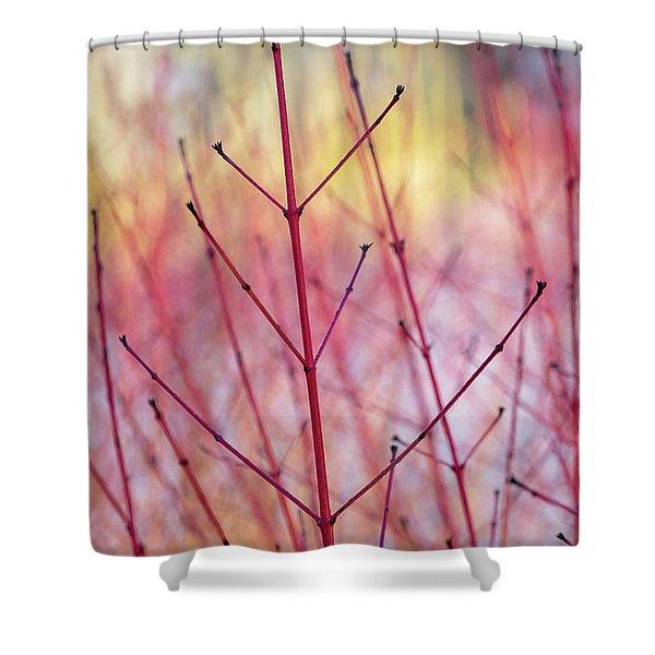Dogwood Midwinter Fire Stems Shower Curtain