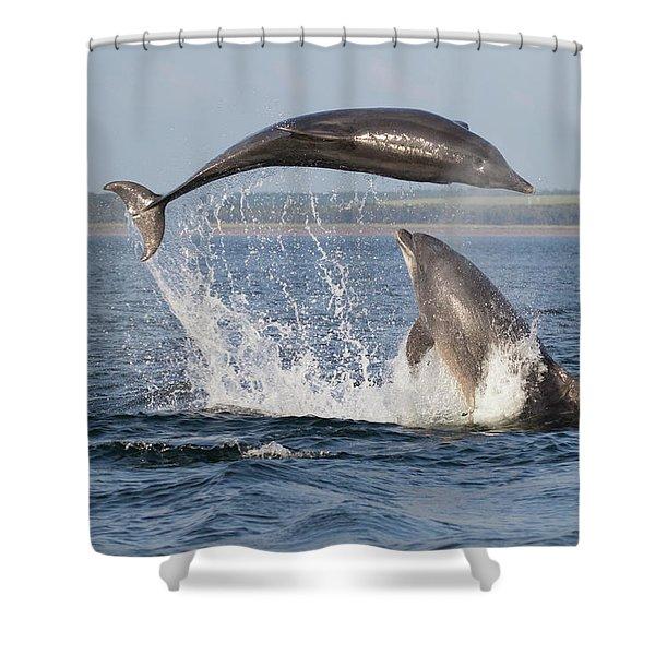 Dolphins Having Fun Shower Curtain