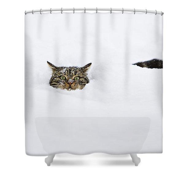 Domestic Cat Felis Catus In Deep Snow Shower Curtain