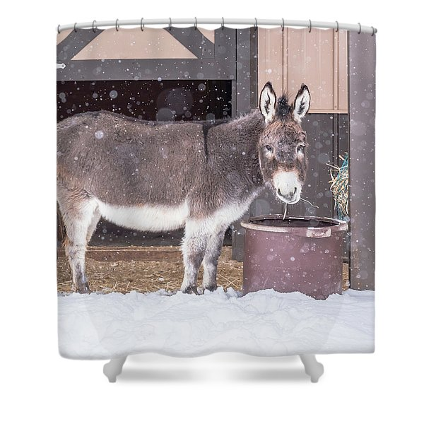 Donkey Watching It Snow Shower Curtain