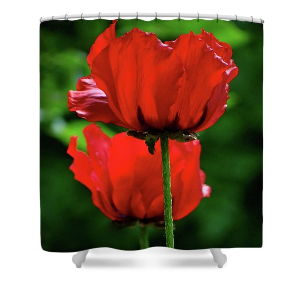 Double Red Poppies Shower Curtain