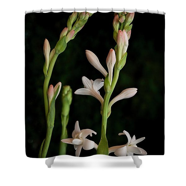 Double Tuberose In Bloom #2 Shower Curtain