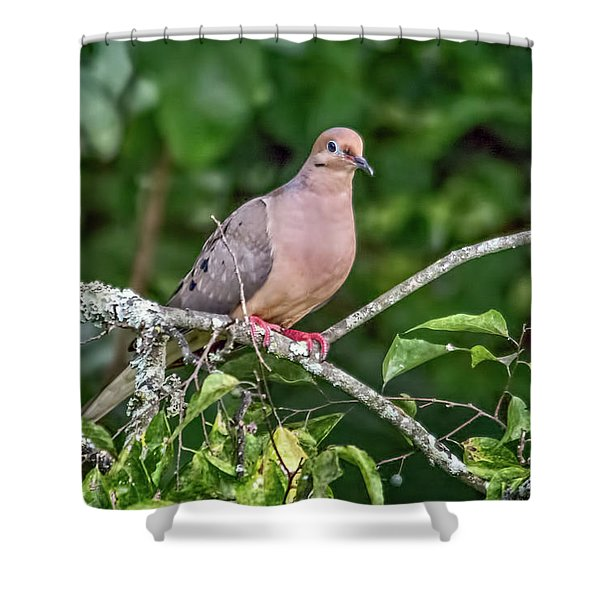 Dove On A Branch Shower Curtain