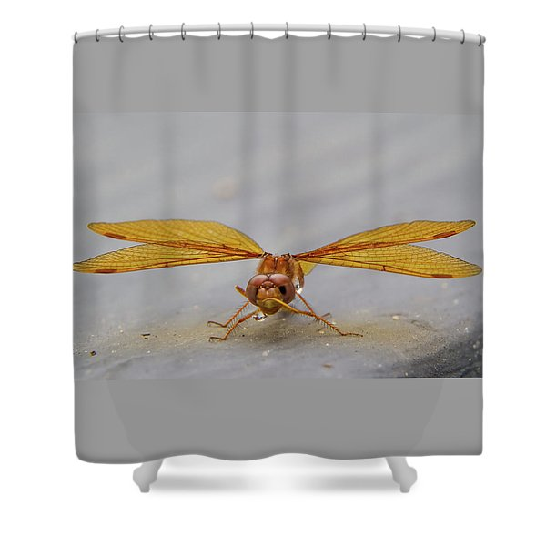 Dragon Fly Hanging Around Shower Curtain