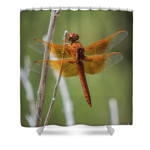 Dragonfly 10 Shower Curtain
