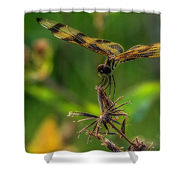 Dragonfly Resting On Flower Shower Curtain