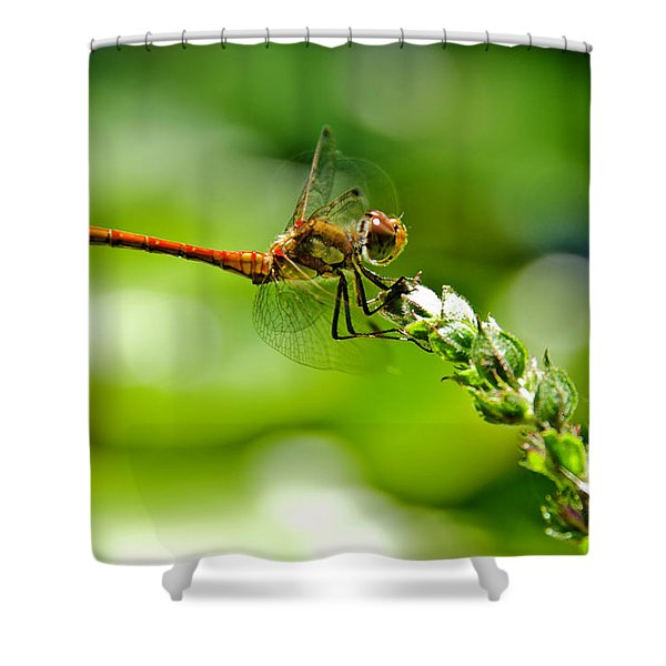 Dragonfly Sitting On Flower Shower Curtain