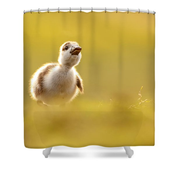 Dream Duckie _egyptian Gosling Shower Curtain